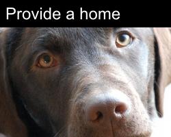 Provide A Home
