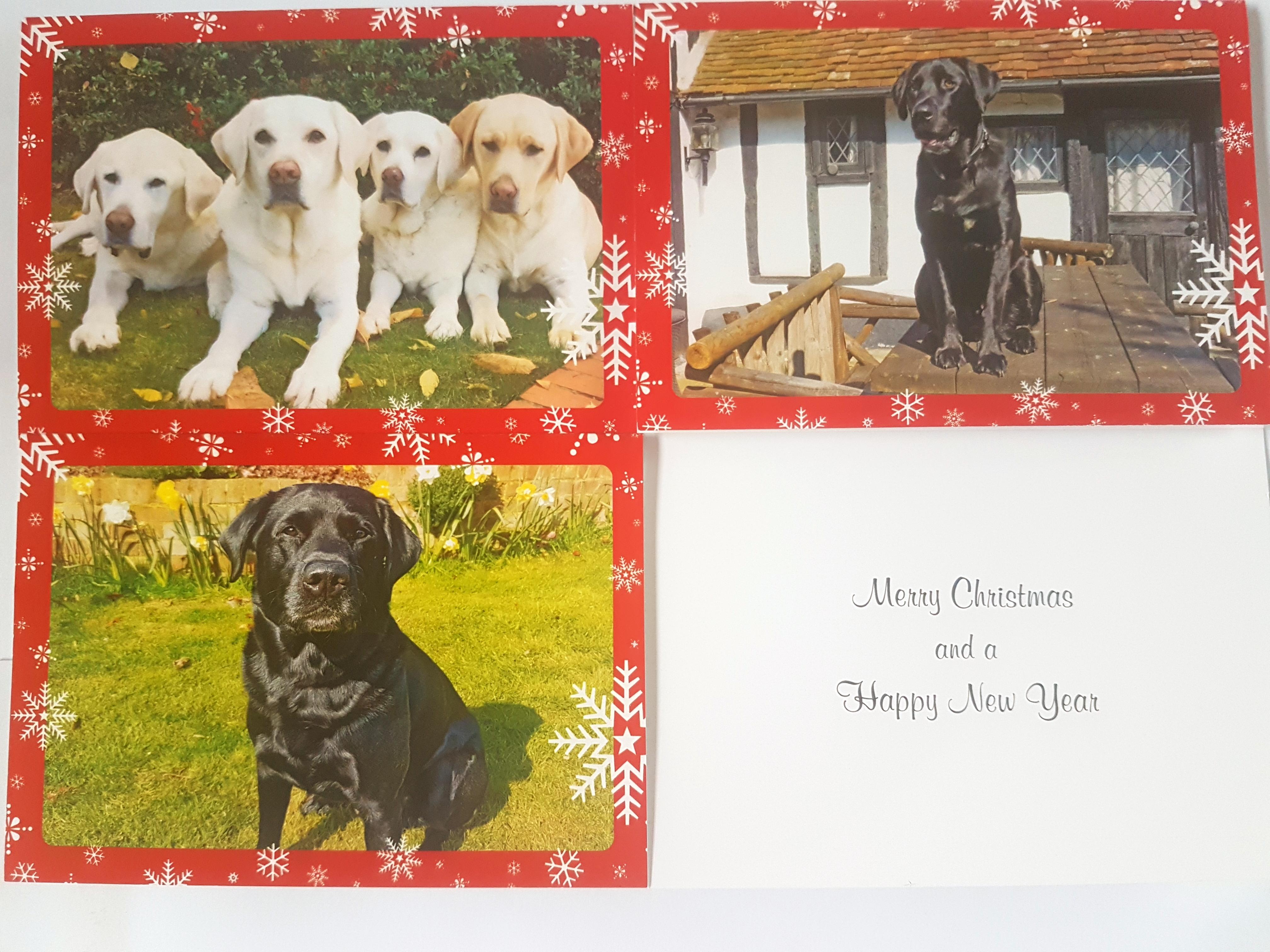 Christmas Cards - Labrador Rescue South East & Central