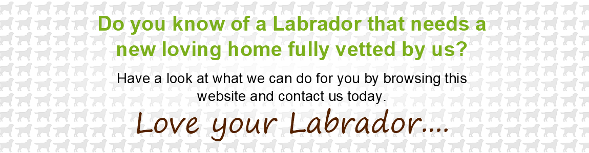 Know Of Labrador That Needs A New Home? Have a look at what we can do for you by browsing our website.