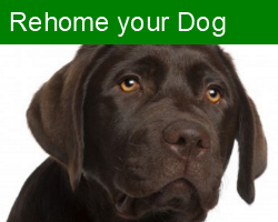 Rehome Your Dog
